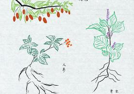 drawings of Chinese medicinal herbs